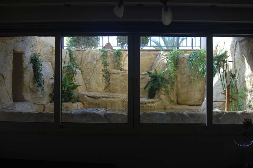 Indoor koi pond affordable indoor koi pond the miniplanet voice with indoor koi pond trendy - Indoor ponds ...